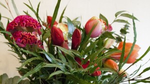 celosia, amarylis, french tulips and roses in the church.